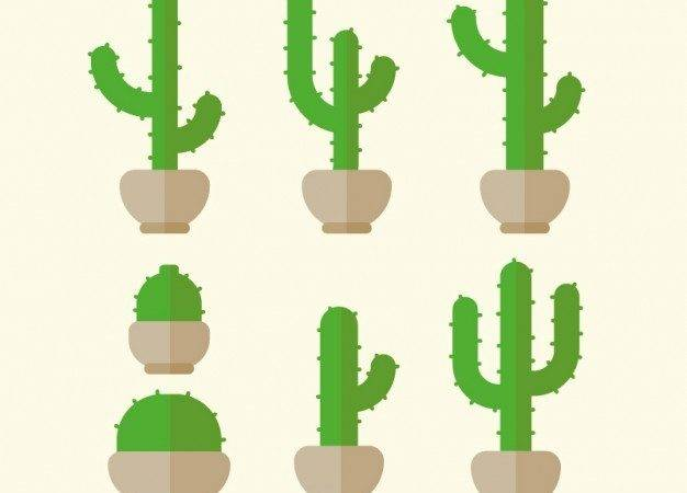 Green Cactus Flat Design Vector