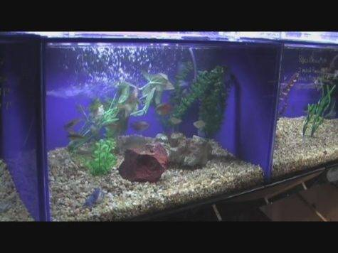 Happy Aquarium Decorating Ideas Interior Design
