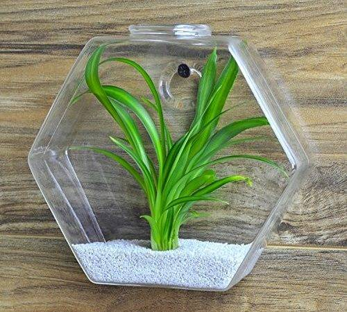 Hexagon Shape Clear Glass Plant Terrarium Small Wall