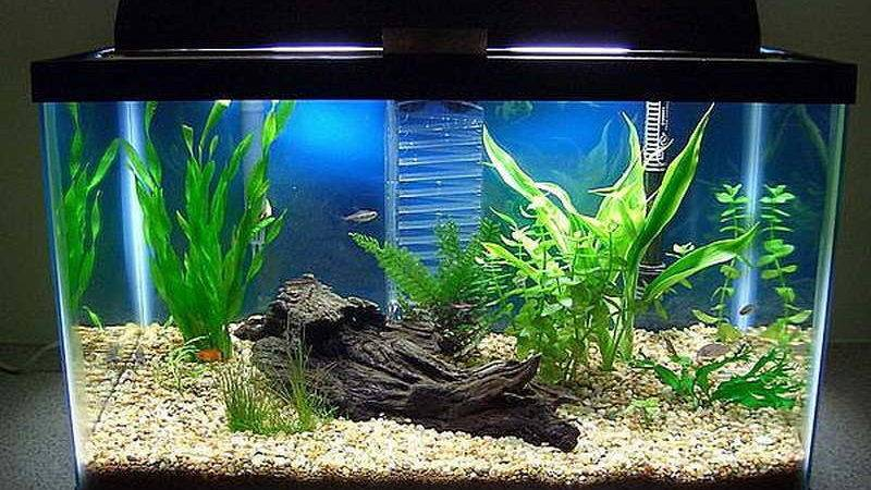 Home Accessories Fish Tank Decoration