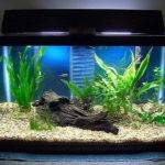 Home Accessories Perfect Fish Tanks Pics Your House