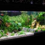 Home Design Interior Monnie Aquarium Decorations Light