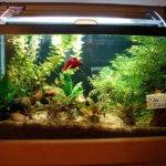Indoor Betta Fish Tank Designs Ideas Decorate