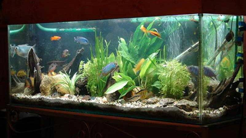 Indoor Decorate Fish Tank Designs Ideas Unique