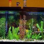 Indoor Decorate Fish Tank Designs Ideas