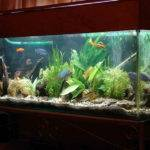 Indoor Small Fish Tank Designs Ideas Decorate