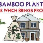 Keep Bamboo Plant Here House Prosperity Wealth