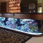 Make Professionally Designed Fish Tank Ideas