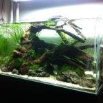 Marvelous Fish Tank Ideas Freshwater Additional