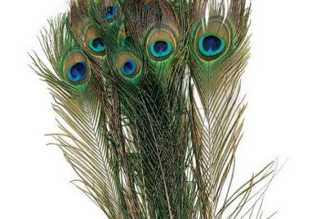 Natural Peacock Feather Wedding Decoration Long