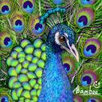 Peacock Animals Speedpaint Drawing Bamboo Queeky