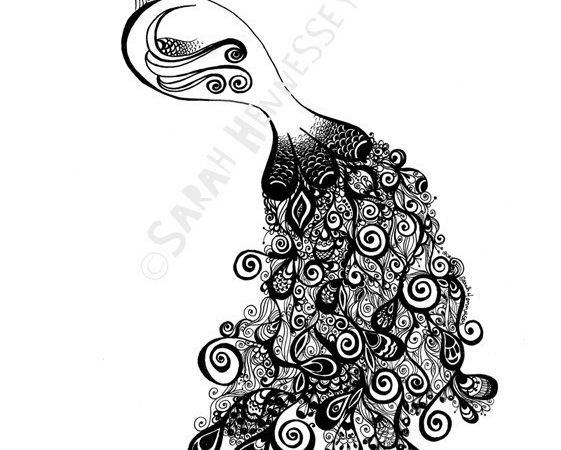Peacock Drawing Black White Cliparts