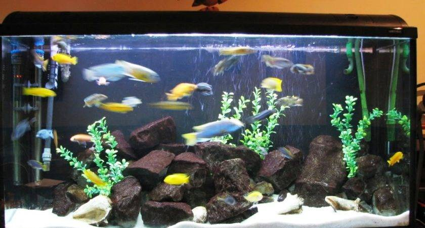 Personalized Aquarium Decorations