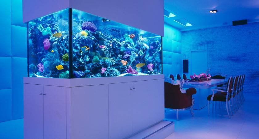 Rooms Stunning Aquariums Decoholic
