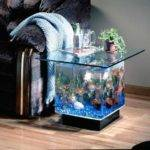 Small Aquarium Design Ideas Fish Tank