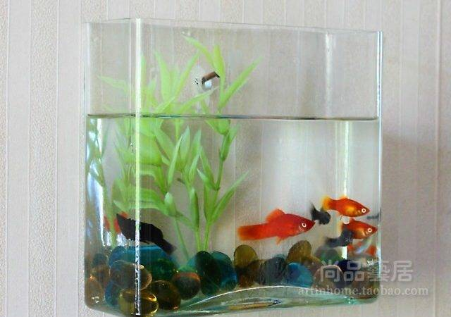 Small Fish Tank Maintenance Custom Design Aquarium