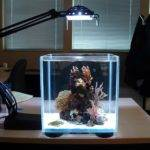 Small Lighting Aquarium Design Photos