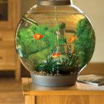 Small Round Aquarium Ideas