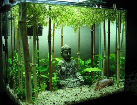 Top Amazing Unusual Themed Fish Tanks