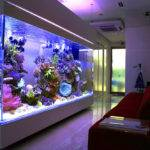 Top List World Coolest Aquariums Fails