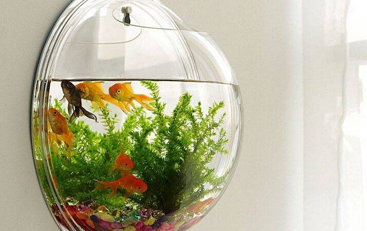 Unique Mini Aquarium Ideas Pinterest Fish Tank