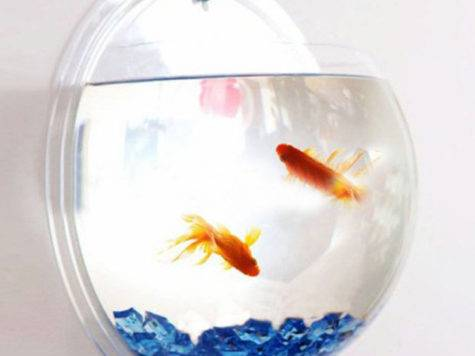 Wall Mounted Fish Bowl Take Paycheck Shut