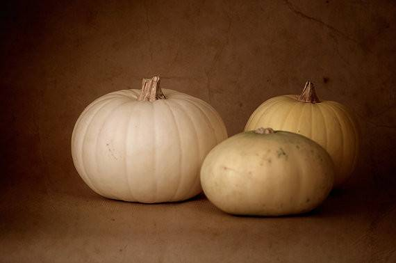 White Pumpkin Photograph Fall Decor Still