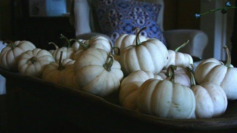 White Pumpkins Fall Decor